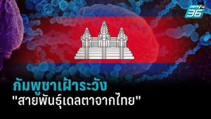 """กัมพูชาเฝ้าระวัง """"สายพันธุ์เดลตาจากไทย"""" ผ่านแรงงานกลับประเทศ"""