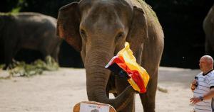ช้างในเมืองฮัมบูร์ก ทำนาย เยอรมนี ชนะอังกฤษ ศึกยูโร 2020