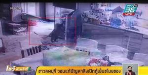 ลิงสุดแสบ มุดกรงเหล็กเข้าบ้าน เปิดตู้เย็นขโมยอาหาร ชาวลพบุรีวอนรัฐแก้ปัญหา