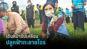"""""""มนัญญา"""" เตรียมลุย ปลูกฟ้าทะลายโจร ป้อนแพทย์แผนไทย"""