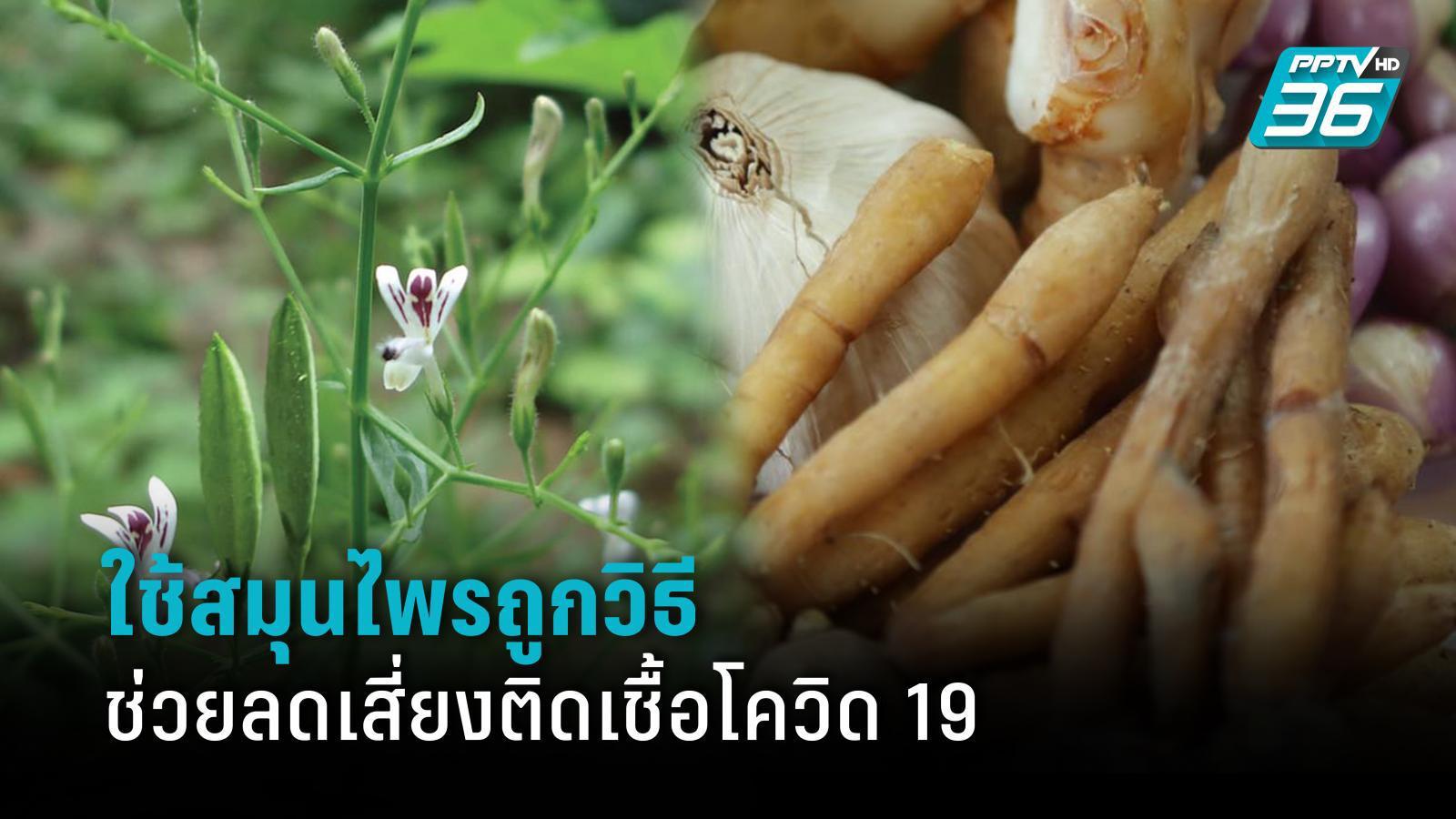 ใช้สมุนไพรไทยดูแลสุขภาพ ถูกวิธีช่วยลดเสี่ยงติดเชื้อโควิด 19
