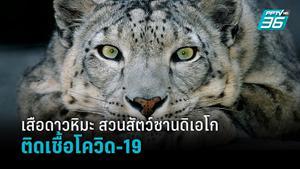 เสือดาวหิมะสวนสัตว์ซานดิเอโก ติดเชื้อโควิด-19 พบยังไม่ได้ฉีดวัคซีน