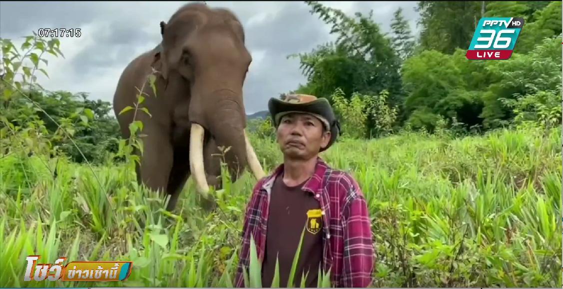 ช้างดมกลิ่น ช่วยหาชายหลงป่านาน 16 วัน