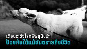เตือนทาสแมว-ทาสสุนัข ระวังโรคพิษสุนัขบ้าไม่มียารักษาแต่ป้องกันได้