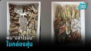 """พบ""""ปลาโรนัน""""ในกล่องสุ่มอาหารทะเล"""