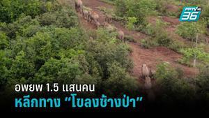 """จีนอพยพชาวบ้าน 150,000 คน เปิดทาง """"โขลงช้างป่า"""" กลับถิ่น"""