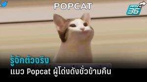 รู้จักตัวจริงแมว POPCAT เกมฮิตชั่วข้ามคืน ที่คนไทยจิ้มจนได้อันดับ 1
