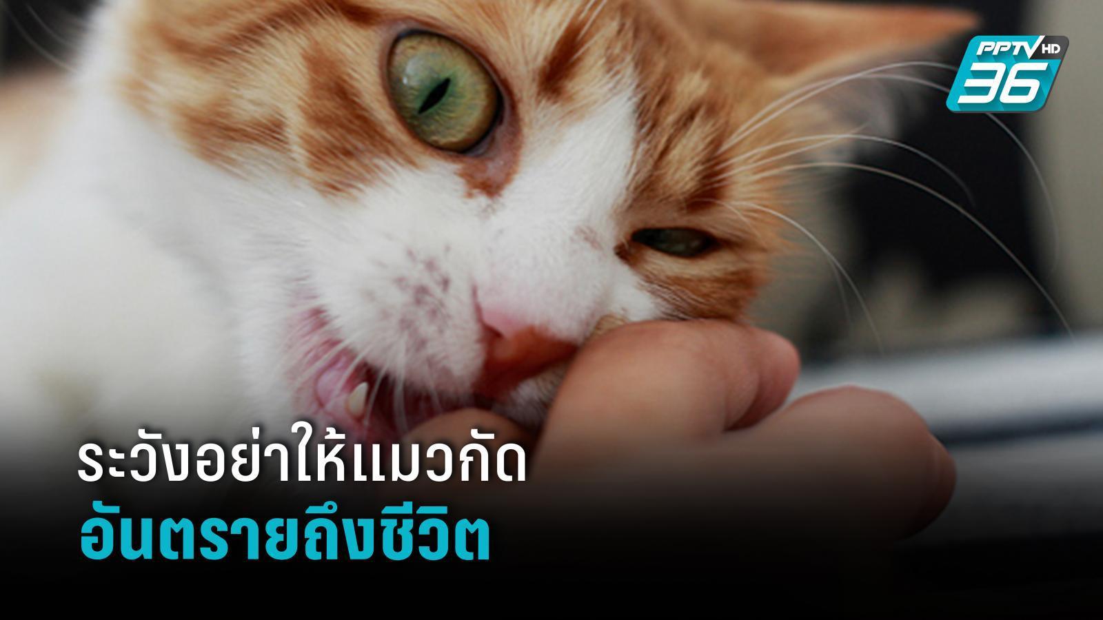 รู้หรือไม่....แผลที่ถูกแมวกัด อันตรายกว่าที่ถูกสุนัขกัด