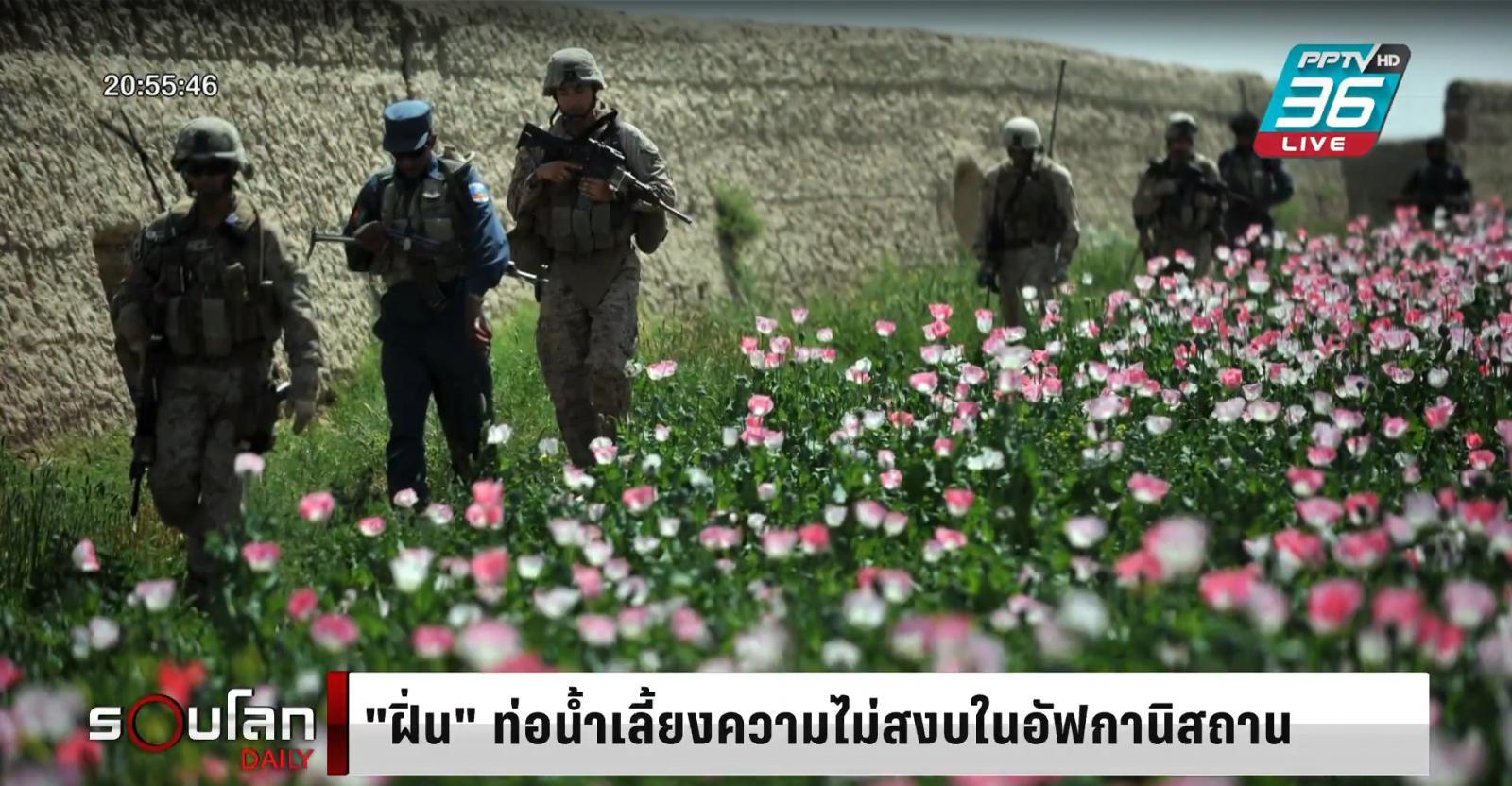 """""""ฝิ่น"""" ท่อน้ำเลี้ยงความไม่สงบใน อัฟกานิสถาน"""