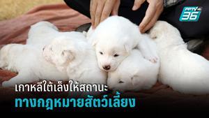 เกาหลีใต้เล็งให้สถานะทางกฎหมายสัตว์เลี้ยง