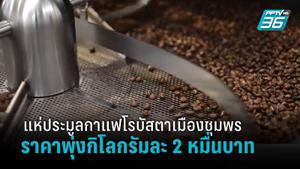 เมล็ดกาแฟโรบัสตาจากเมืองชุมพรทำราคาประมูลสูงสุด 2 หมื่นบาทต่อกิโลกรัม