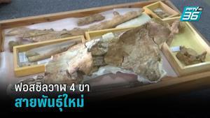 อียิปต์พบซากฟอสซิลวาฬ 4 ขาสายพันธุ์ใหม่