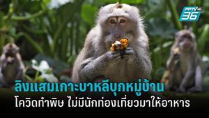 ลิงเกาะบาหลีบุกหมู่บ้าน หลังโควิด-19 ทำพิษ ไม่มีนักท่องเที่ยวมาเยี่ยม