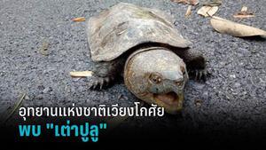 """พบ """"เต่าปูลู"""" สัตว์ป่าใกล้สูญพันธุ์ ที่น้ำตกแม่เกิ๋งหลวง"""