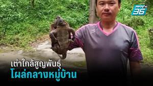 ชาวบ้านเร่งช่วย เต่าปูลูสัตว์ใกล้สูญพันธุ์