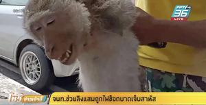 เจ้าหน้าที่ช่วยลิงแสมถูกไฟช็อตบาดเจ็บสาหัส