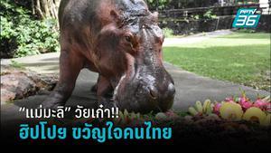 """วัยเก๋า!! """"แม่มะลิ"""" ฮิปโปโปเตมัส ขวัญใจชาวไทย อายุยืนที่สุดในไทย"""