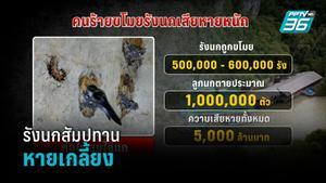 รังนกสัมปทาน 400 ล้าน หายเกลี้ยง จุดไฟเผา หลังมอบจนท.ดูแล