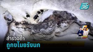สำรวจถ้ำถูกขโมยรังนก พบลูกนกตายเกลื่อน