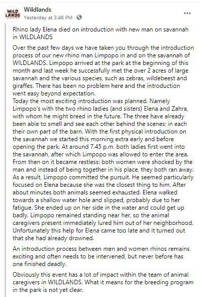 แรดตัวเมียตกใจตัวผู้ วิ่งหนีจมน้ำตายในสวนสัตว์ดัตช์