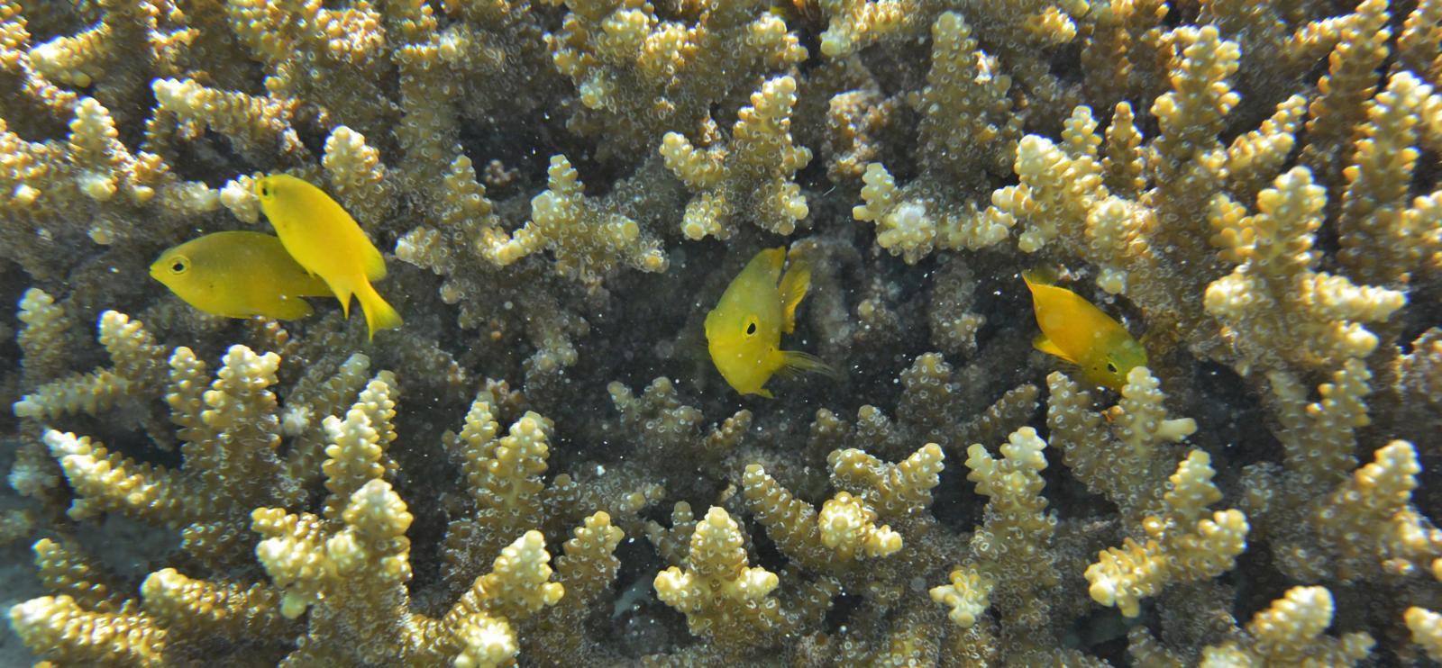 แนวปะการังทั่วโลกหายไปครึ่งหนึ่ง ในระยะเวลาเพียง 70 ปีที่ผ่านมา