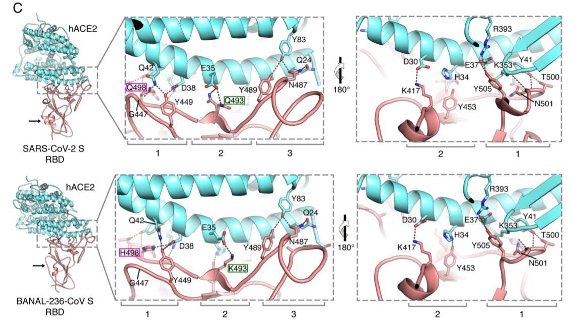 พบไวรัสที่คล้ายโควิด-19 ทางเหนือของลาว ชี้โควิด-19 อาจไม่ได้มาจากแล็บ