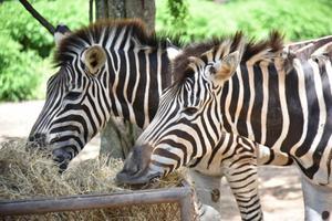 สวนสัตว์เขาเขียว จัดโปรพิเศษ ลด 50% ให้กับนักท่องเที่ยวฉีดวัคซีนโควิด
