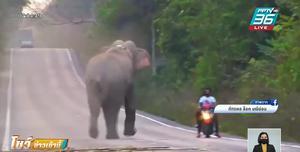 หนุ่มขี่รถจักรยานยนต์เสียงท่อดัง ทำช้างป่าหงุดหงิด