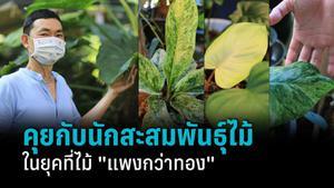 """คุยกับนักสะสมต้นไม้ พร้อมพาชมสวน """"ล้านใบ"""" หลากหลายพันธุ์ไม้มูลค่าสูง"""