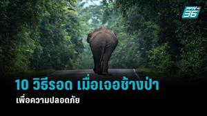 เรื่องต้องรู้! 10 วิธีเอาตัวรอด เมื่อเจอช้างป่า เพื่อความปลอดภัย