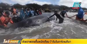ช่วยวาฬเกยตื้นหนักเกือบ 7 ตันในอาร์เจนตินา