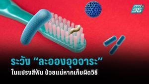 """ระวัง """"ละอองอุจจาระ"""" ในแปรงสีฟัน ป่วยแน่หากเก็บผิดวิธี"""