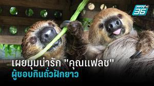 """เผยมุมน่ารัก """"คุณแฟลช"""" สล็อตขวัญใจเด็กประจำสวนสัตว์เปิดเขาเขียว อาหารโปรดคือถั่วฝักยาว"""