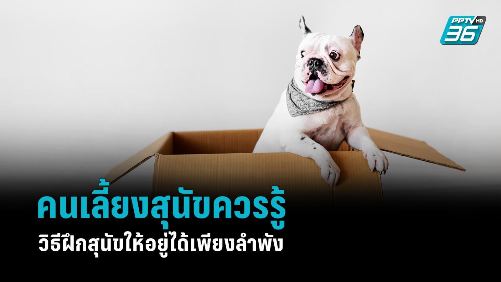 คนเลี้ยงสุนัขควรรู้ วิธีฝึกสุนัขให้อยู่ได้เพียงลำพัง
